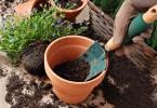 Cómo plantar en macetas