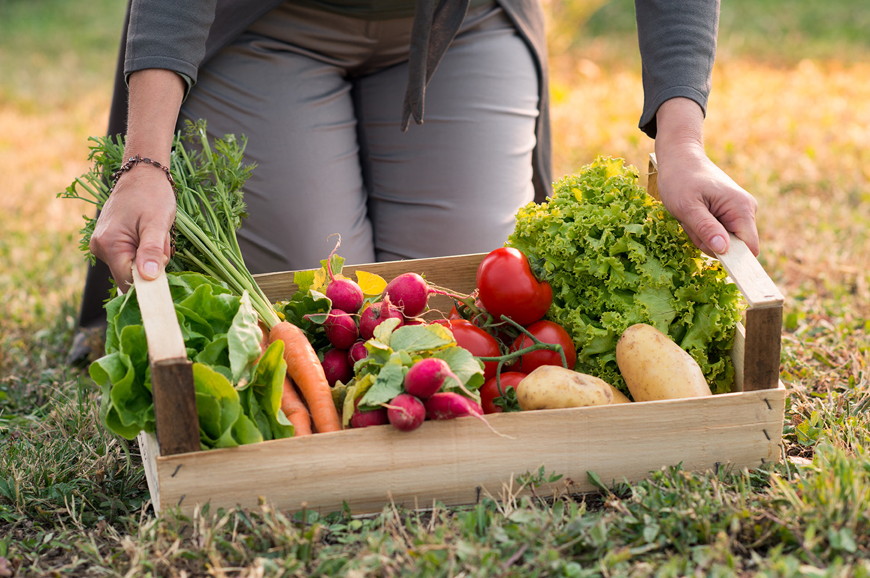 C mo crear un huerto en casa el huerto urbano for Cultivar vegetales en casa