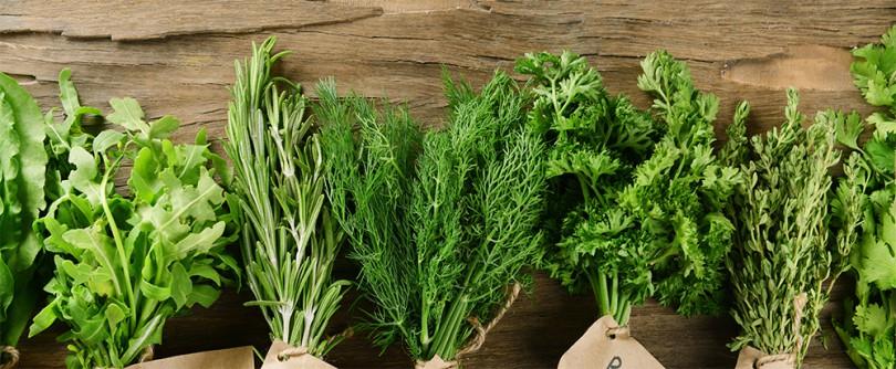 C mo recolectar plantas arom ticas y medicinales el huerto urbano - Plantas aromaticas jardin ...