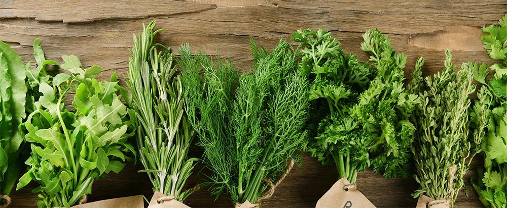 C mo recolectar plantas arom ticas y medicinales el huerto urbano - Jardin de aromaticas ...