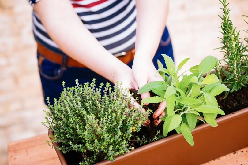 Sembrar plantas arom ticas el huerto urbano - Plantas aromaticas jardin ...