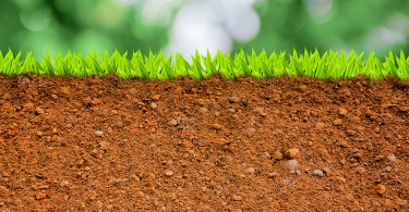 tipos de suelo para un huerto urbano o un jardín ecológico
