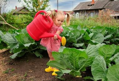 Crear un huerto escolar ecológico