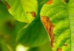 Por qué enferman nuestras plantas