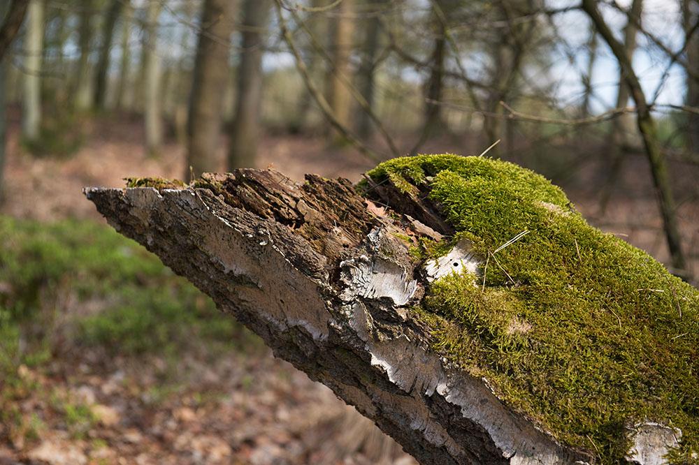 Las pilas de tronco envejecidos con musgo son un buen refugio