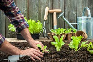 Sembrar a partir de semillas en interiores o plantarlas al aire libre